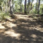 Cleared-Bush-Fire-Track